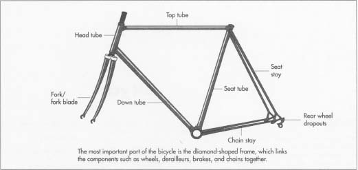 The frame consists of the front and rear triangles, the front really forming more of a quadrilateral of four tubes: the top, seat, down, and head tubes. The rear triangle consists of the chainstays, seatstays, and rear wheel dropouts. Attached to the head tube at the front of the frame are the fork and steering tube.