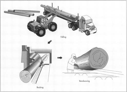 During felling, the trees are cut down with chain saws and the limbs are removed. At the mill, the logs are debarked and bucked, or cut to a predetermined length. Then they proceed to the bandsaw for further processing.