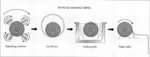 How plywood is made - material, making, used, processing, structure
