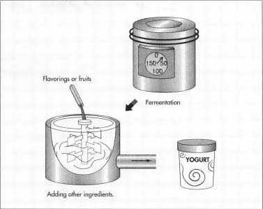how yogurt is made manufacture, making, used, composition, productthe milk substance is fermented until it becomes yogurt fruits and flavorings are added to