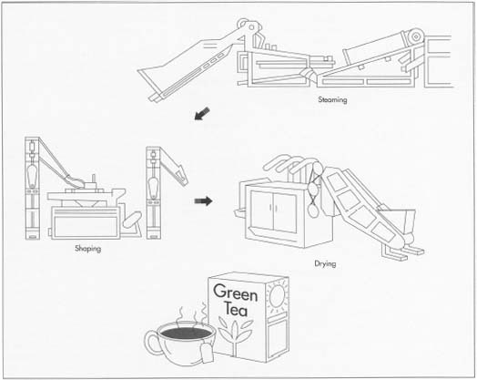 How Green Tea Is Made Making Used Processing Parts
